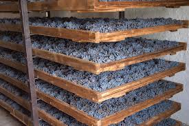 Grapes drying under controlled conditions for the Amarone
